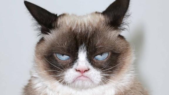 Grumpy Cat Cleaning Service